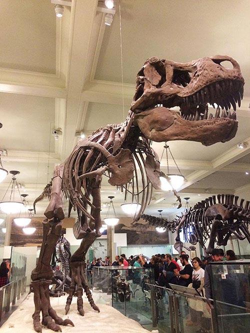2017年最新版「アメリカ自然史博物館」の見どころ、行き方、料金、お土産について