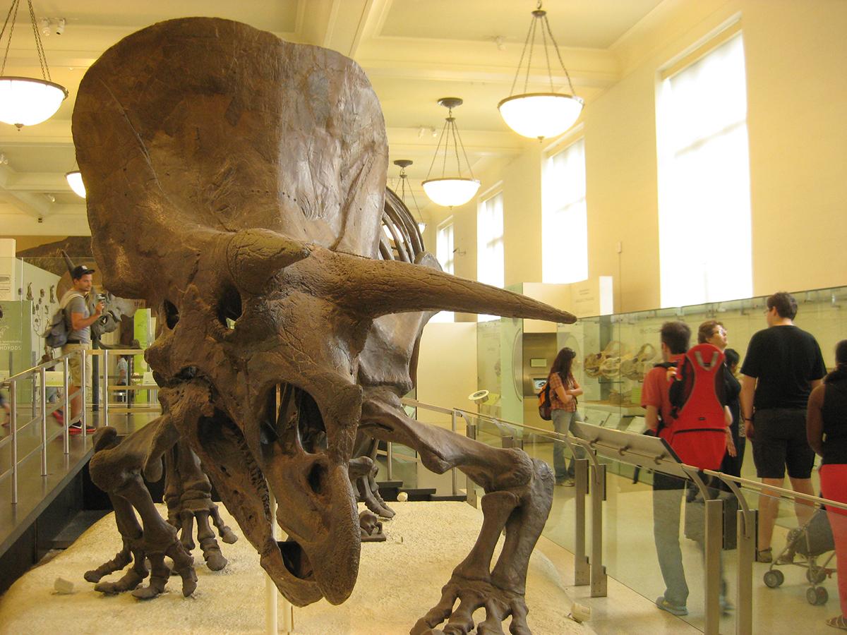 壮大なスケール!アメリカ自然史博物館の完全解説