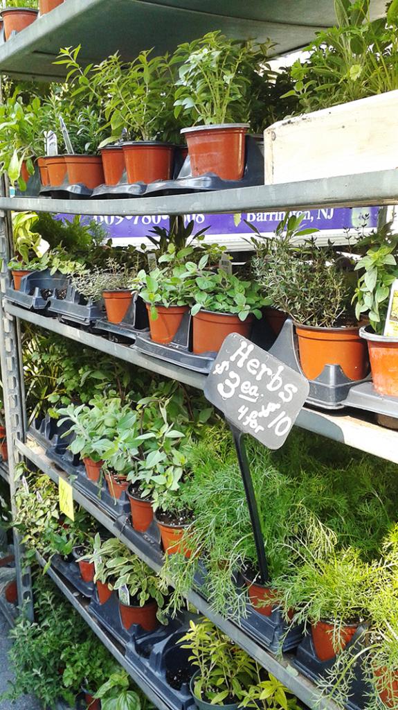 farmersmarket_herbs