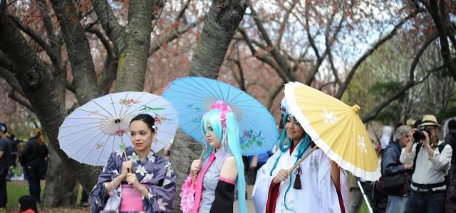 NYで桜を楽しもう!お花見スポットBEST 7!